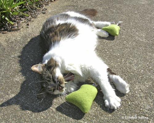 My cat yawns as he is playing with fleece catnip toys by Elizabeth Ruffing