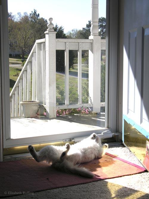 Kitten rolls in the sunshine