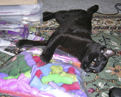 Kitty plays with bag of catnip knots
