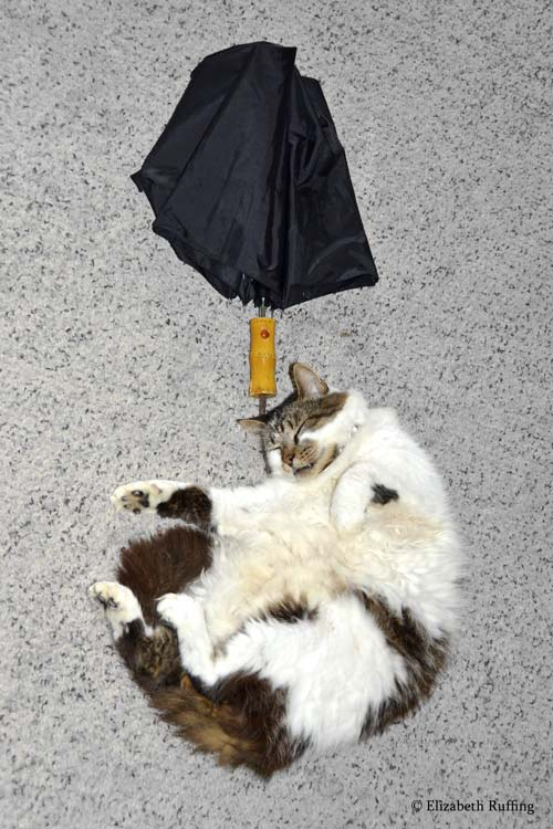 Kitty cat sleeping with his head on the umbrella handle by Elizabeth Ruffing