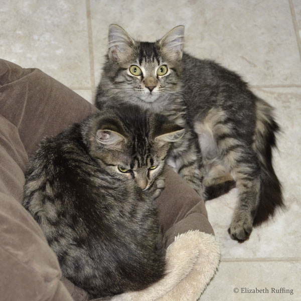 Two tabby kittens on a cat bed, photo by Elizabeth Ruffing