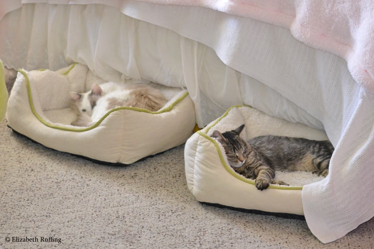 Josie and Bertie asleep in adjoining cat beds, by Elizabeth Ruffing