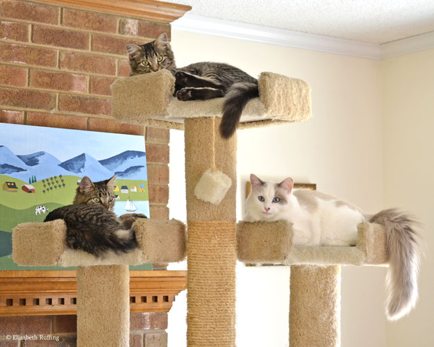 Tabby kittens and Josie on cat tree, by Elizabeth Ruffing