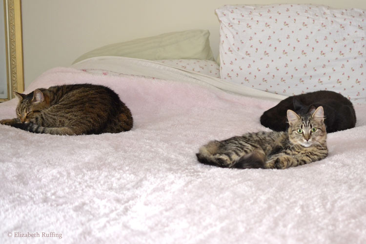 Kitty cats on Fluffie blanket by Elizabeth Ruffing