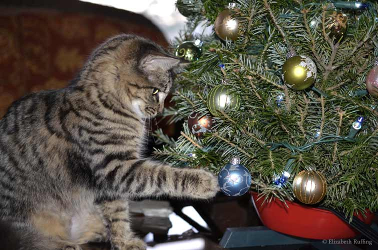 Phoebe swats a Christmas ornament, photo by Elizabeth Ruffing