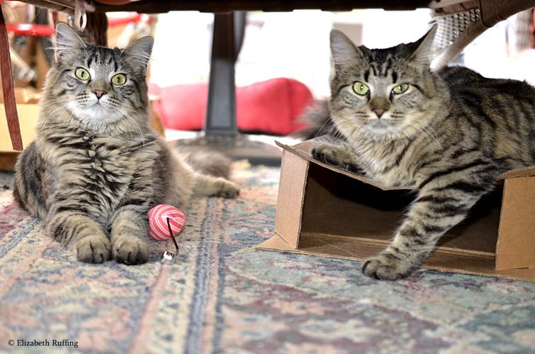 Tabby kittens playing with boxes and catnip mice