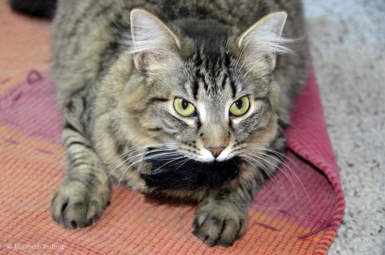 Tabby cat with fake fur scrap by Elizabeth Ruffing