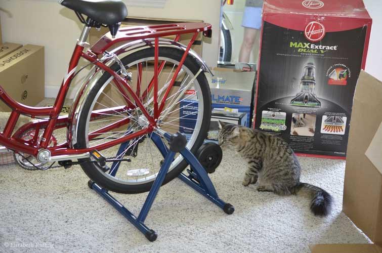 Kitty investigating bike trainer stand