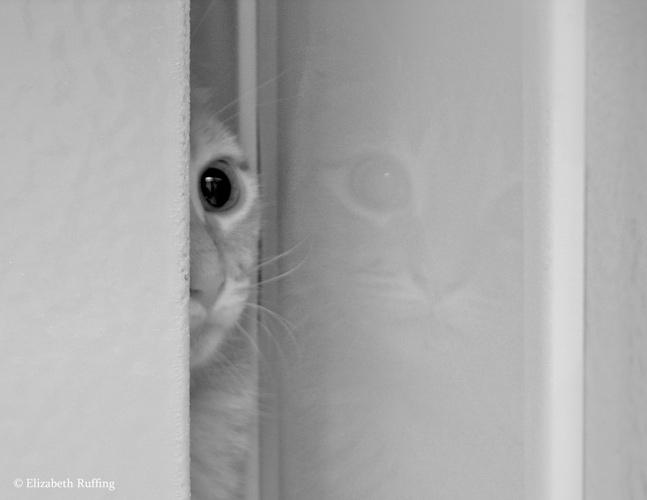 Edmund, Ginger Tabby kitten by Elizabeth Ruffing