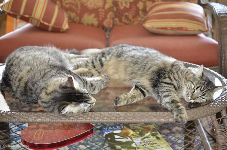 Tabby cats napping on a table, by Elizabeth Ruffing
