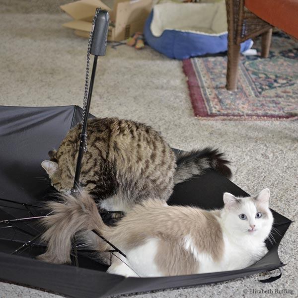 Kitty cats playing in an umbrella, photo by Elizabeth Ruffing