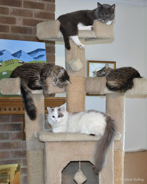 Four cats sleeping on a cat gym, photo by Elizabeth Ruffing