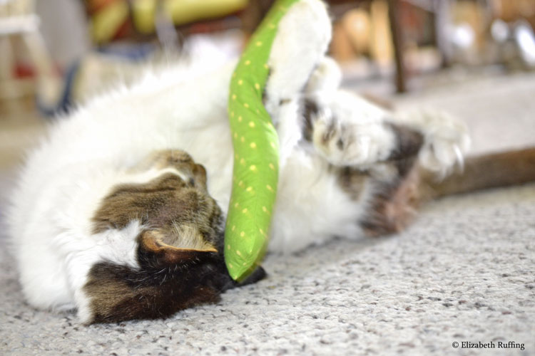 Tabby-and-white kitty cat playing with a catnip cigar, by Elizabeth Ruffing