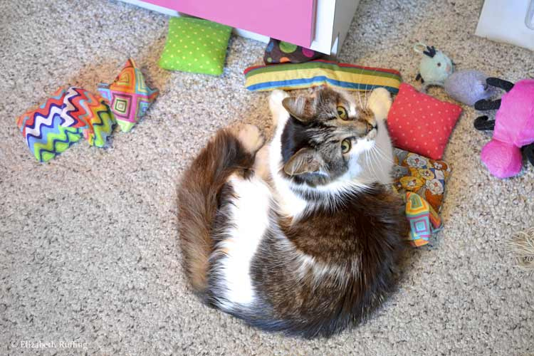 Tabby-and-white kitty cat sitting on a pile of catnip toys, by Elizabeth Ruffing