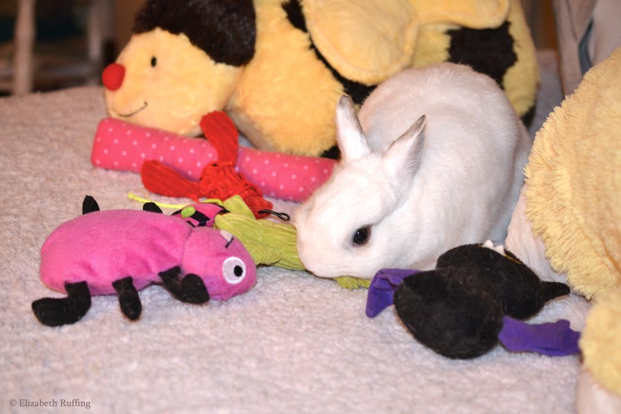 Oliver Bunny playing with cat toys on bed