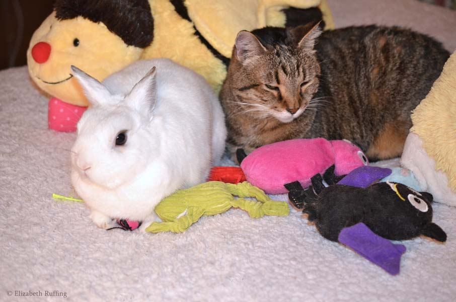 Oliver Bunny and Henrietta kitty sharing cat toys on bed