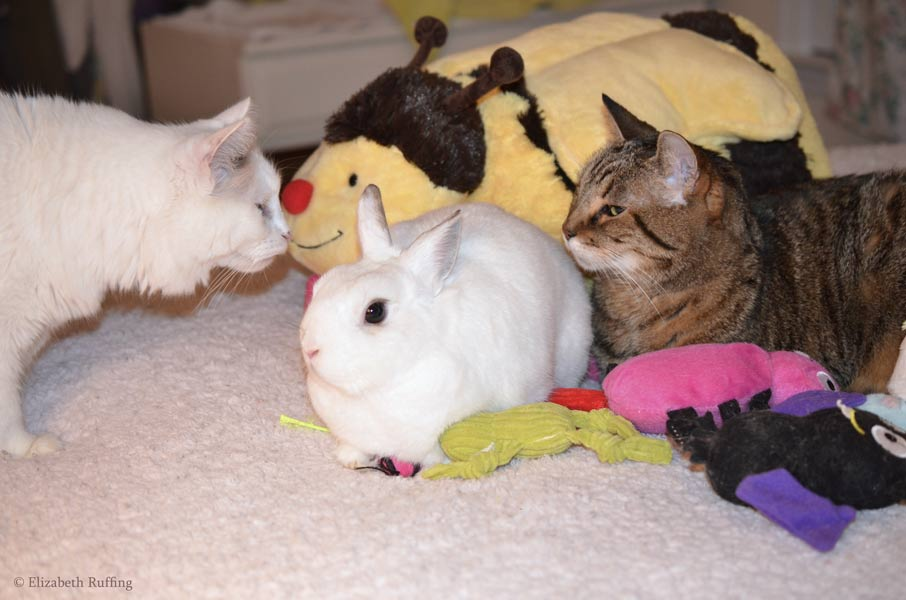 Oliver Bunny and Henrietta kitty sharing cat toys on bed, while Josephine investigates